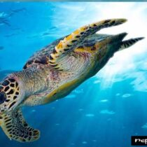 Nearly Extinct Marine Reptile Facts